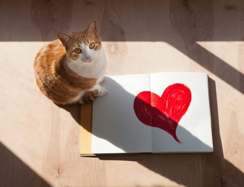 The Heart of the Matter: How to Identify Heart Disease in Your Pet