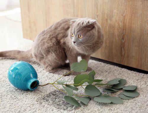 Feline Behavior: Unraveling the Mystery