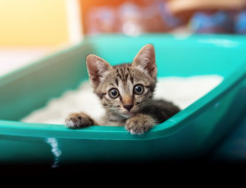 10 Tips To Coax Your Cat To Use The Litter Box