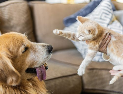 10 Rules to Follow When Introducing a New Pet to Your Household