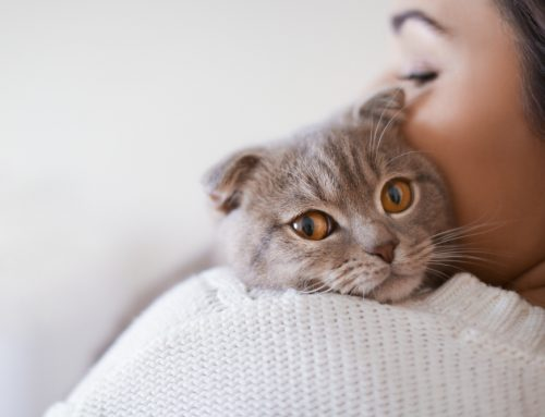 Feeling Low, Feline?—Common Infectious Diseases in Cats
